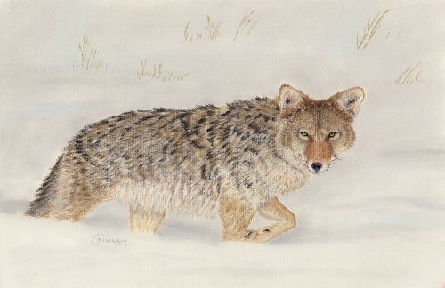 Cristolin Oswald, Coyote in Snow, pastel, 11x17, $150