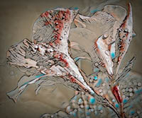 Judy Benson LaNier, Confetti, photo on metal, 17x22, $400